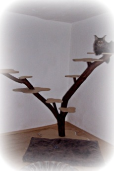 kratzbaum shop. Black Bedroom Furniture Sets. Home Design Ideas